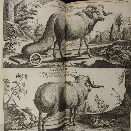 Animals from Ludolf's Historia Aethiopica.